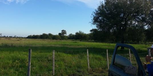 ESTANCIA EN EL CHACO con 2812 Has a 80 KM de Loma Plata